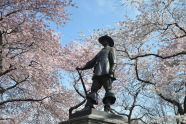 The Pilgrim and His Cherry Trees