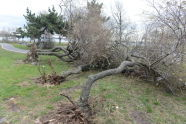 Downed Trees at Clason Point Park