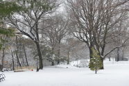 Winter Snow at Fort Greene Park
