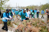 Jamiaca Bay/Rockaway Parks Resotration Corps