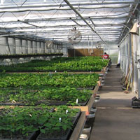 picture of GNPC greenhouse