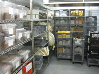 picture of the seed bank