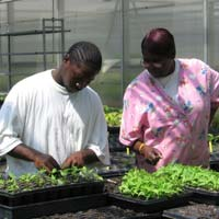 Job Walker, intern, and Denese Hite working in a greenhouse
