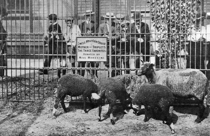 History Of Central Park Zoos Nyc Parks